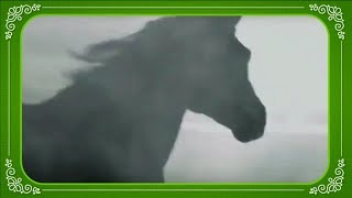 Сила Грации Лошадей