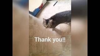 Babylove the Service Cat thanks her GoFundMe contributors