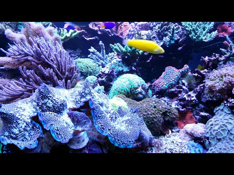Full Tour Of Amazing 700 Gallon Reef System In 4K