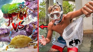 CATCHING LIVE CRABS TO FEED MANTIS SHRIMP!! *epic*