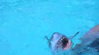 Pool Puppets Shark is coming!