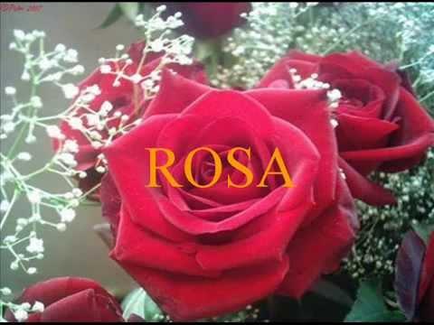 ROSA nicola di bari.wmv