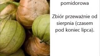Termin zbioru warzyw (ponad 60) | infoUprawa