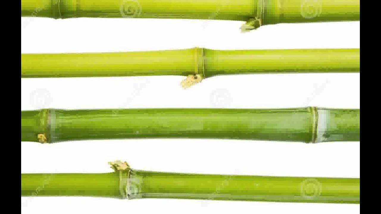 Bamboo sticks images youtube for Where to buy bamboo sticks for crafts