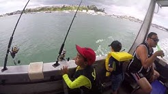 Phoenix Charters - Fishing Half Moon Bay - Auckland NZ - 2017 Feb 24th