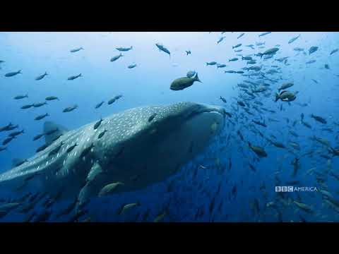 Planet Earth: Blue Planet II | The Making Of Radiohead & Hans Zimmer - (ocean) bloom | BBC America