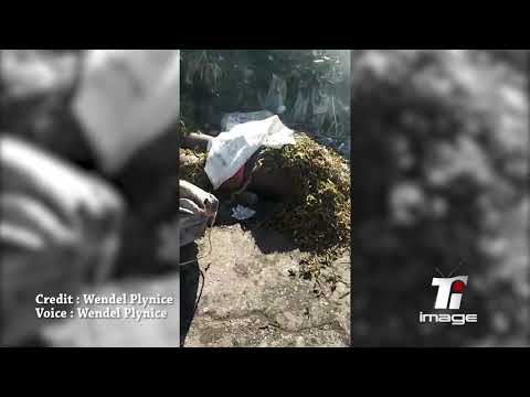 Haiti Breaking News - Massacre a La Saline , bidonville de Port-Au-Prince