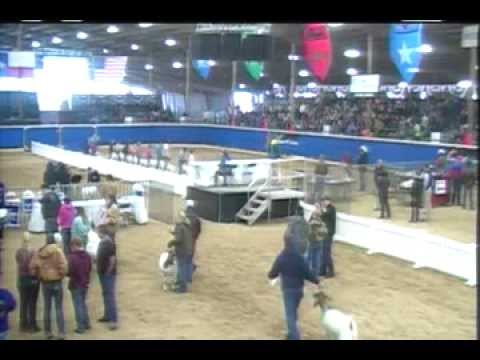 Open And Youth Boer Goat Show- Broadcast - Competitive Events Rodeo Austin
