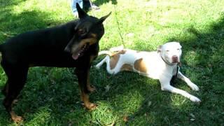 3) Flicka At All Star Dog Training