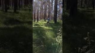 Алабай подросток девочка продажа. Екатеринбург.