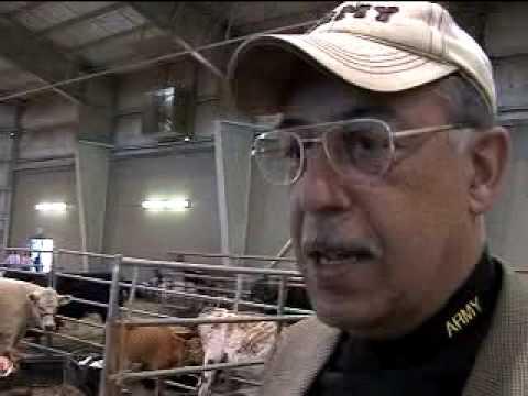 su livestock show honore live