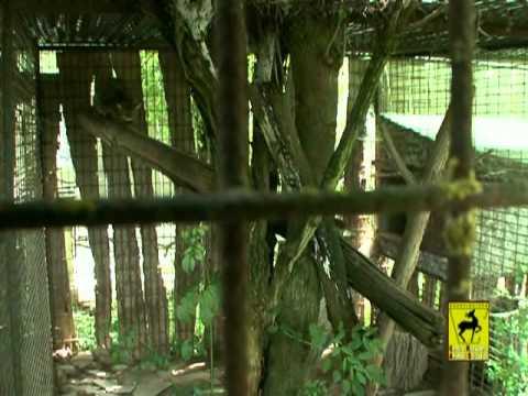 Presentazione Centro di Recupero Animali Selvatici (Parte 1)