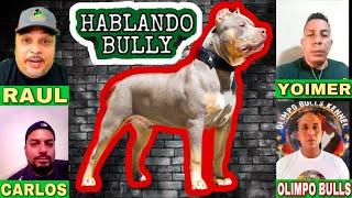 PITBULL/AMERICAN BULLY XL ESTRUCTURA Y APLOMOS|Hablando Bully
