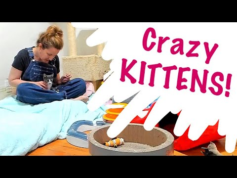 Foster mom Sarah visits her adorable foster kittens in the Kitten Cuddle Room 10/17/17
