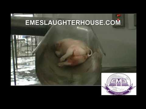 EME pig slaughterhouse equipment port abattoir meat processing