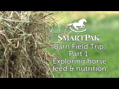 SmartPak Barn Field Trip, Part 1: Exploring horse feed and nutrition