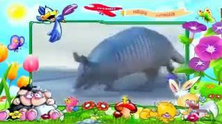 дикие животные для детей видео смотреть онлайн. В Мире Детей!