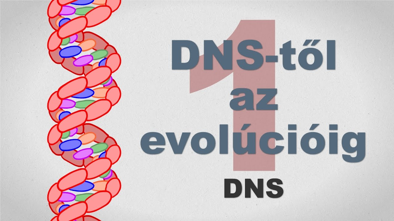 A DNS-től az evolúcióig - csak egyszerűen (1. rész)