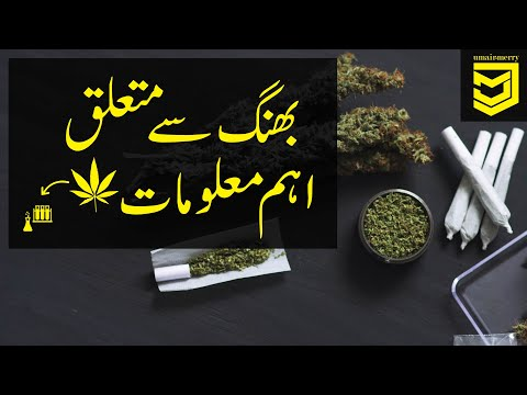 Cannabis Drug (Bhang/بھنگ) information in Urdu/Hindi
