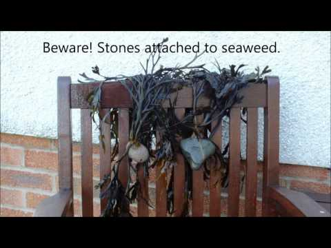 HGV How to grow (make) winter compost, start to finish. A seaweed & leaves mix Part 2 of 2