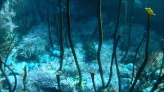Big Sur dive 1-16-2013