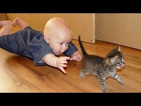 birlikte oynamak komik kediler ve bebekler  sevimli kedi