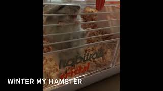 Hamster's Playing Time