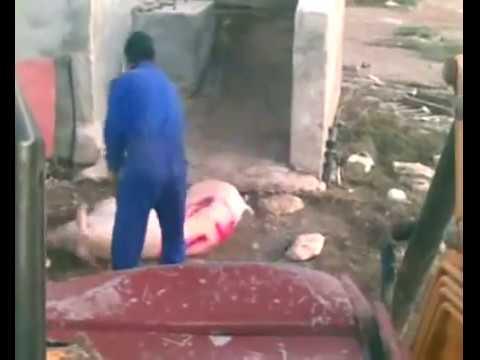 Spanish Pig Farm Brutality Exposed!  February 2012