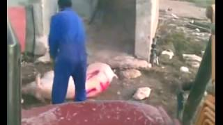 Spanish Pig Farm Brutality Exposed!  February 2012