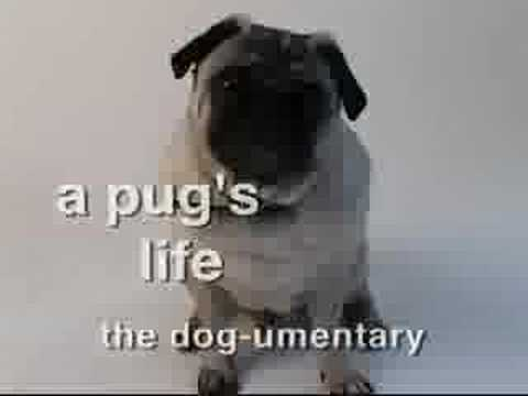 « Watch Full A Pug's Life: The Dogumentary