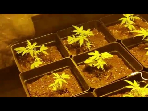 04 (seguimiento indoor) Riego crecimiento, controlando la EC