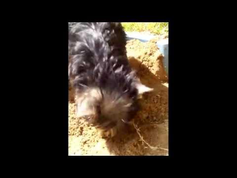 Смешное видео собак - Страница 2