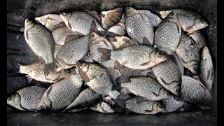 Экстримальная Опасная Рыбалка Последний лед Ловля карася