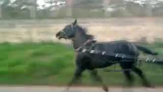 corrida de cavalos argentinos em Atibaia 04/07/11