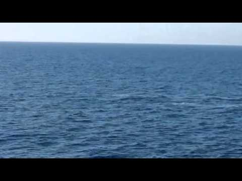 2 Whales In The Pacific Ocean (VIDEO)
