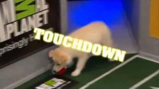 Aberdeen - Best Puppy On Puppy Bowl