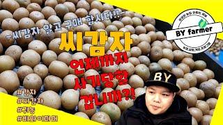감자재배방법 씨감자 구매
