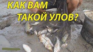 Рыбалка на кастинговую сеть отличные броски и отличный улов на кастинговую сеть cast net рыбалка