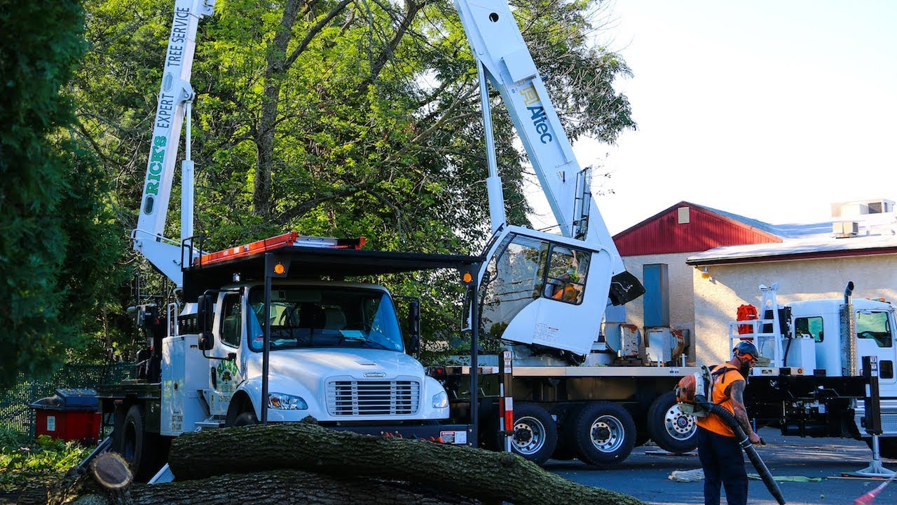 Altec Crane Tree Removal With Bucket Truck Bucks County Pa