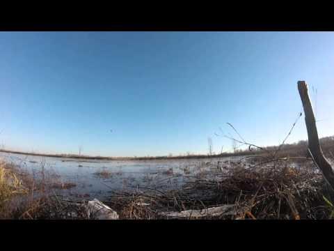 Missouri River Wetland Duck Hunt