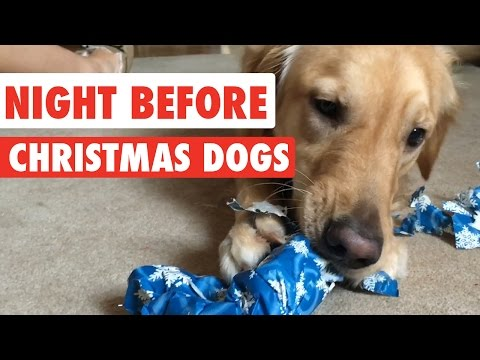 Night Before Christmas Dogs Video Compilation 2016