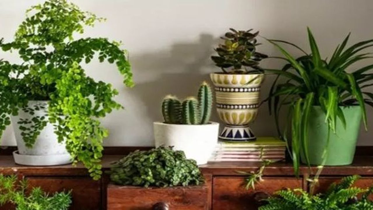 Researchers Claim that If You Want to Live Longer You Need to Have More Plants Around You