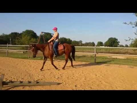 Velvet doing intro level Western Dressage (June 21 2016)