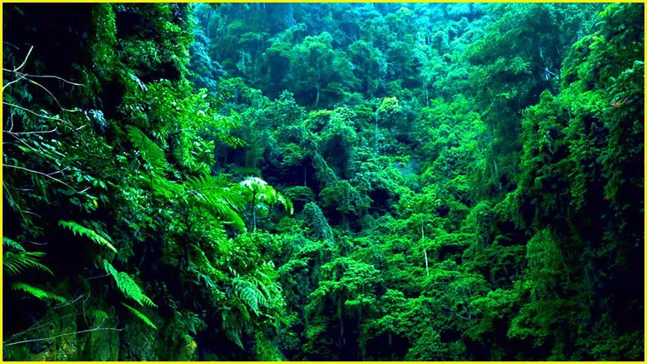 【聞いたことがありますか?】熱帯雨林の音 非常にリラックス「自然の音 」 Youtube