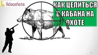 Как ПРАВИЛЬНО целиться в кабана на охоте? Videoohota