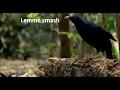 BEST OF LEMME SMASHS Compilation Ft: Falcaun