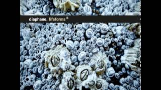 Diaphane - Rhizomes