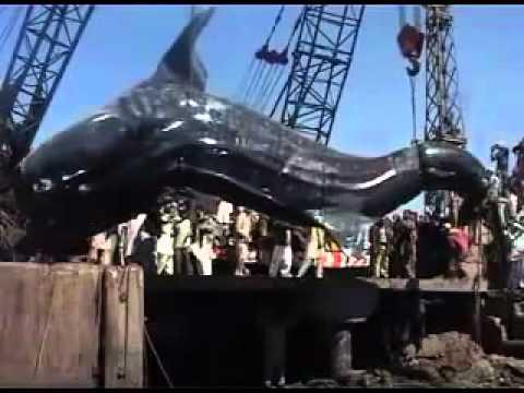 จับฉลามยักษ์ 41 ฟุต !!ในทะเล ปากีสถาน