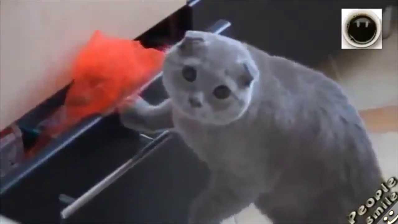 Cat Drawer Meme