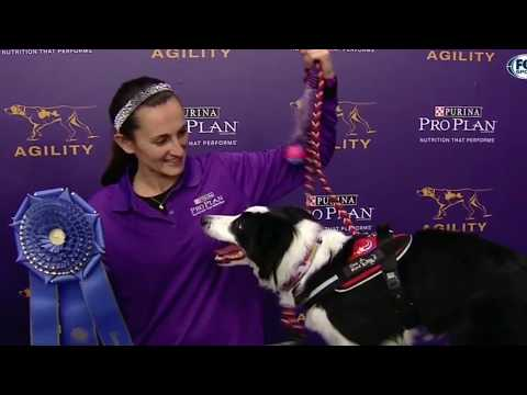 OneMind Dogs Coach Jessica Ajoux  - Westminster Winning Agility Run Analysis